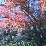 長谷寺、東大寺に行って来ました。
